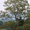 森井迫のキササゲ